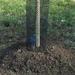 Namestimo zaščito debla